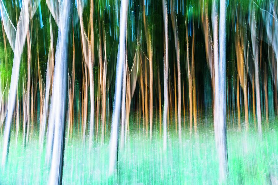 Plantation Golden Hour 3 Photograph