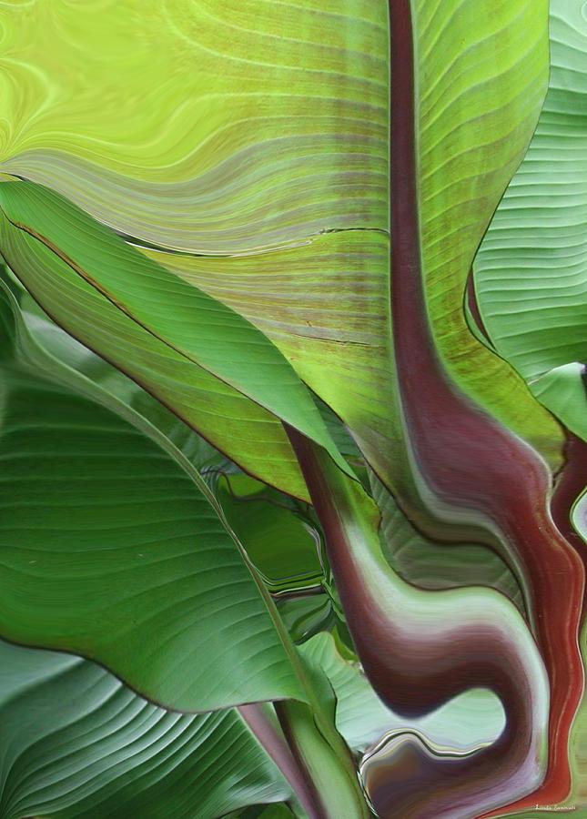 Plant Photograph - Plantflow by Linda Sannuti