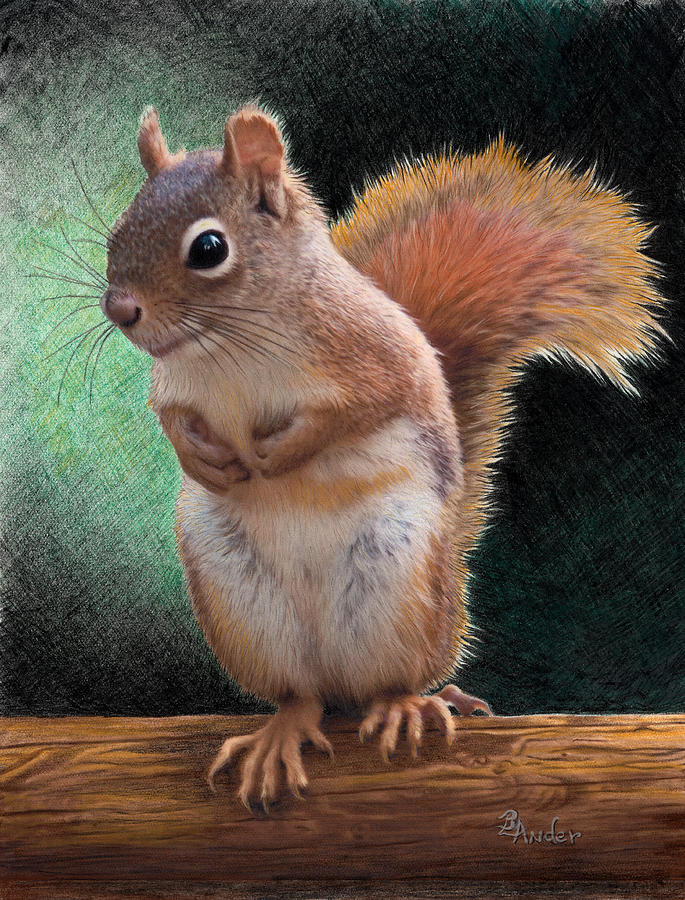 Squirrel Drawing - Please by Brent Ander