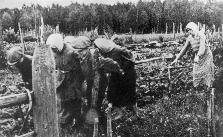Ploughing without horse or machines in World War II, 1943 Photograph by Tass