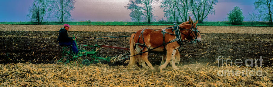 Plow Days Pecatonoa Stephenson Winnabago Freeport IL  team donke by Tom Jelen