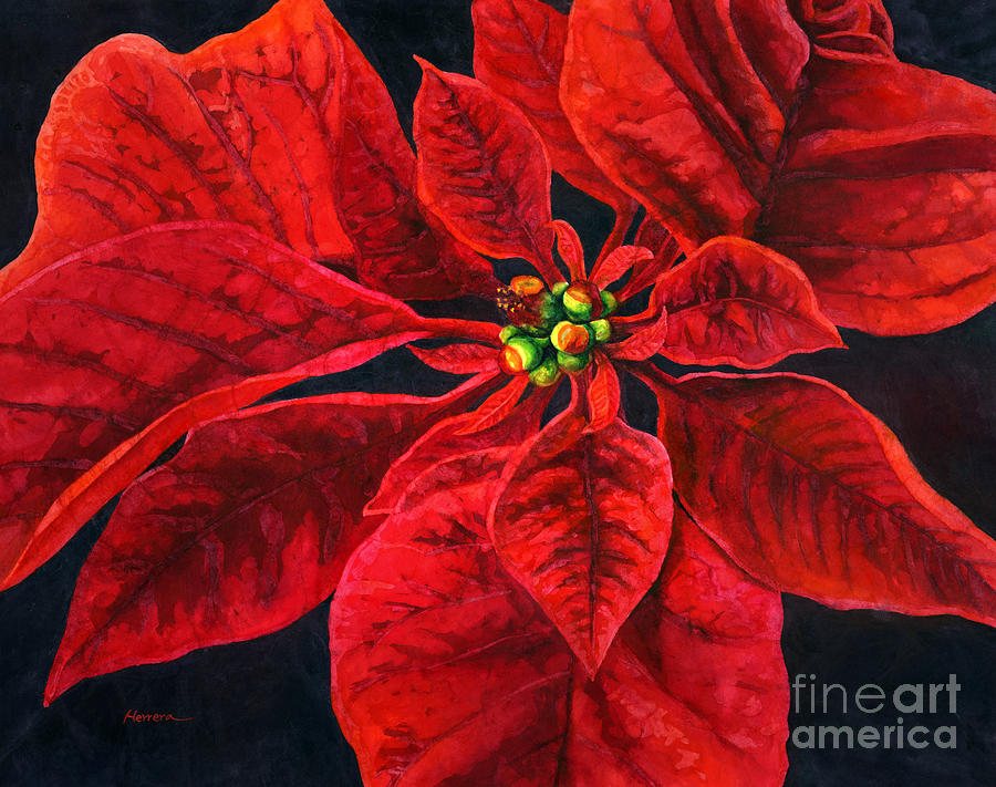 Poinsettia Passion Painting