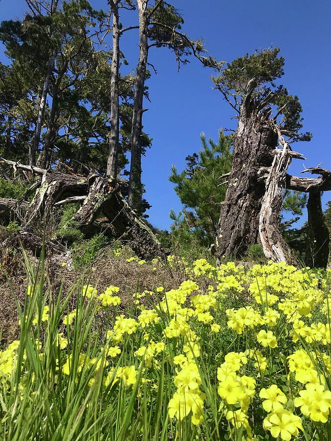 Point Lobos Blooms Photograph