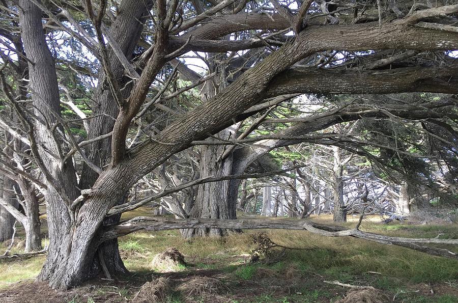 Point Lobos Path Photograph
