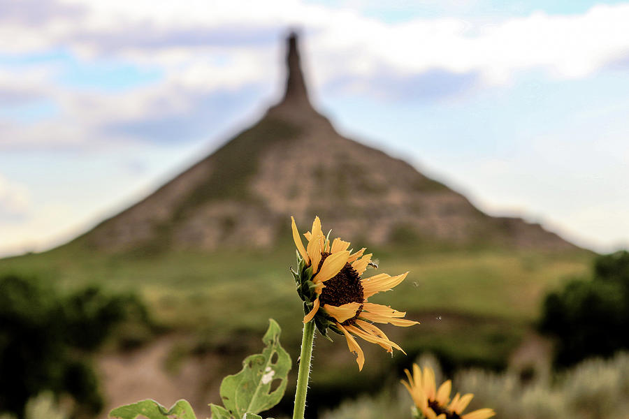 Chimney Rock Photograph - Pollinating on the Oregon Trail by Kamie Stephen