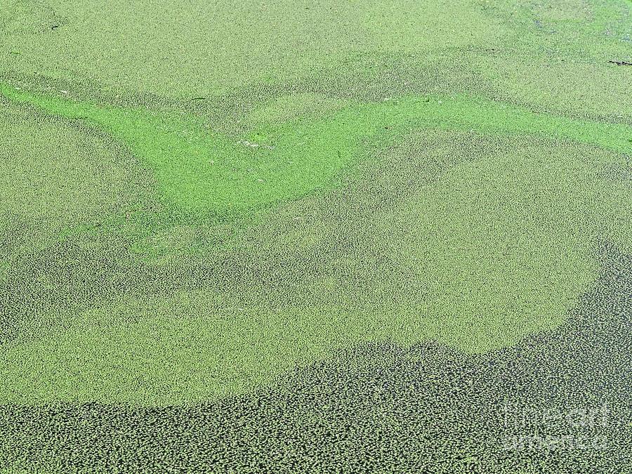 Pond Art Photograph