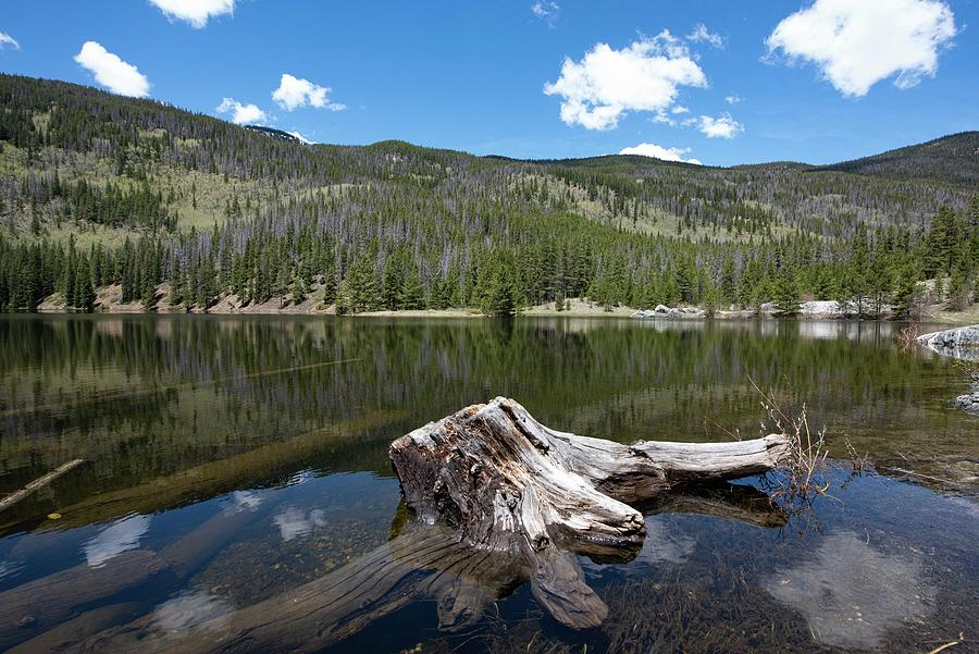 Pond Life Photograph