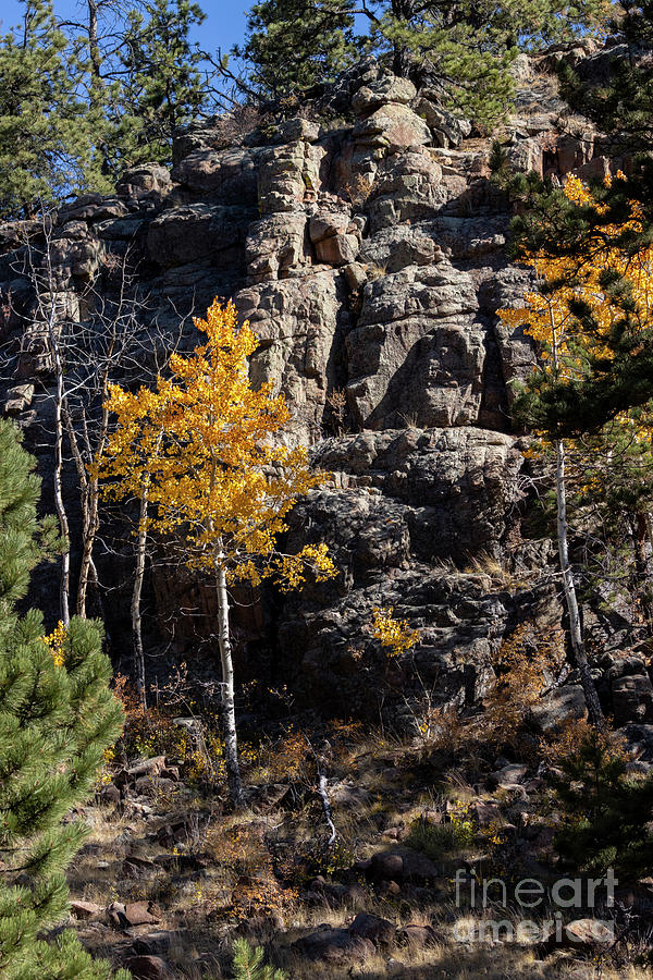 Pony Gulch Trail In Autumn Photograph