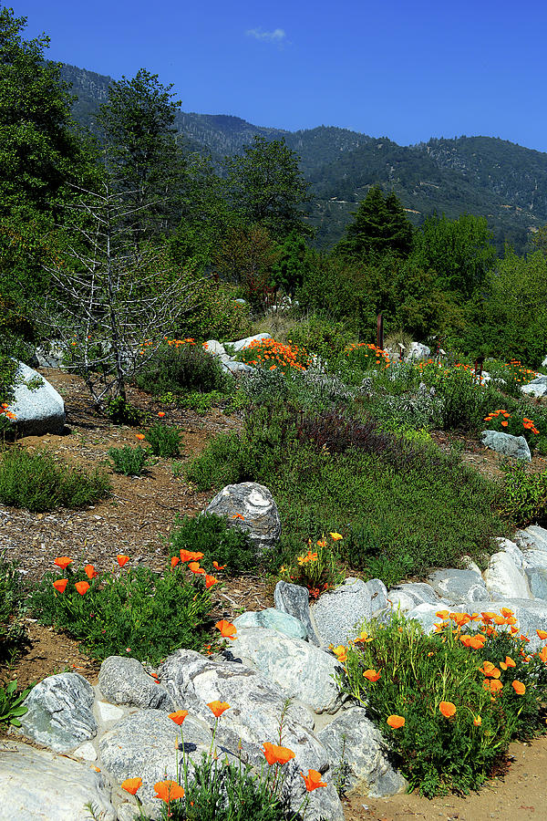 Poppies,pathways,and Mountains Photograph