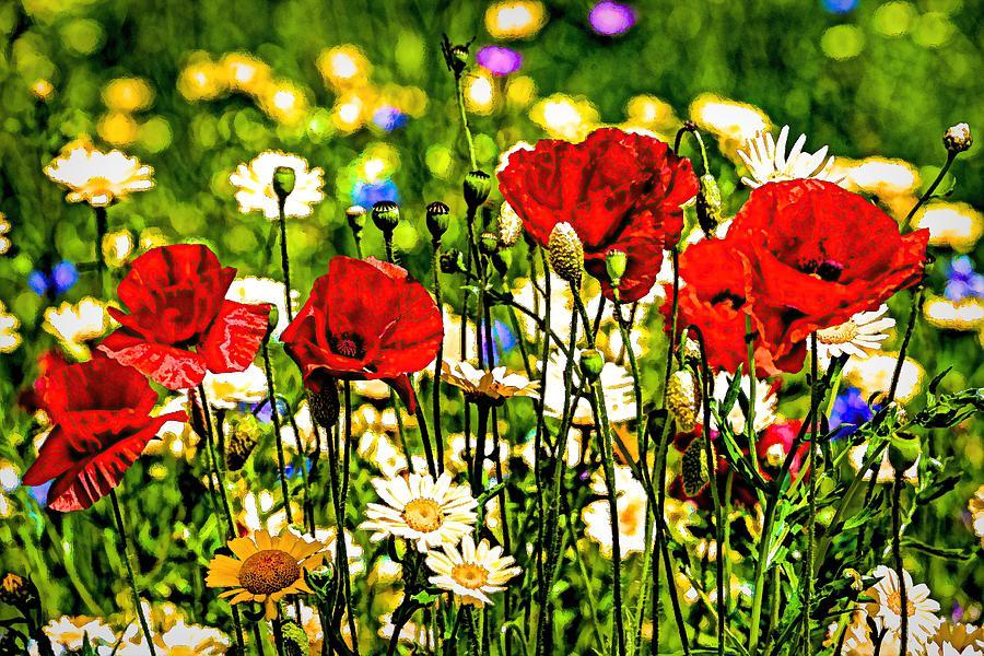 Poppy And Daisy Art Photograph