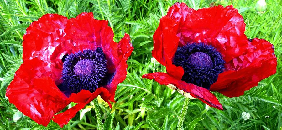 Poppy Partners by Will Borden