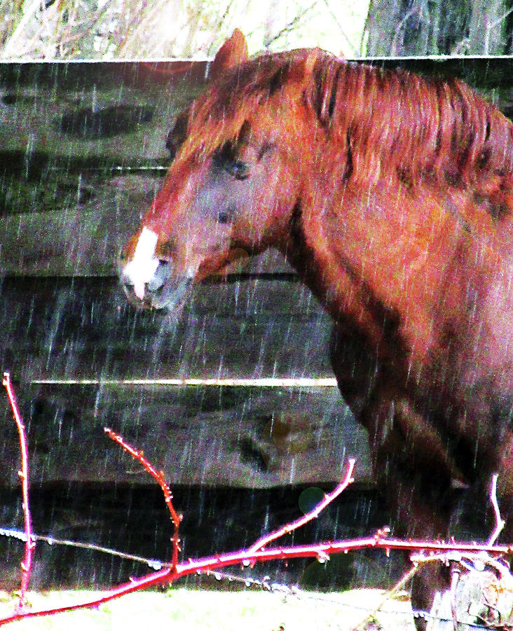 Portrait Of A Horse Under Cover In A Sleet Storm Digital Art