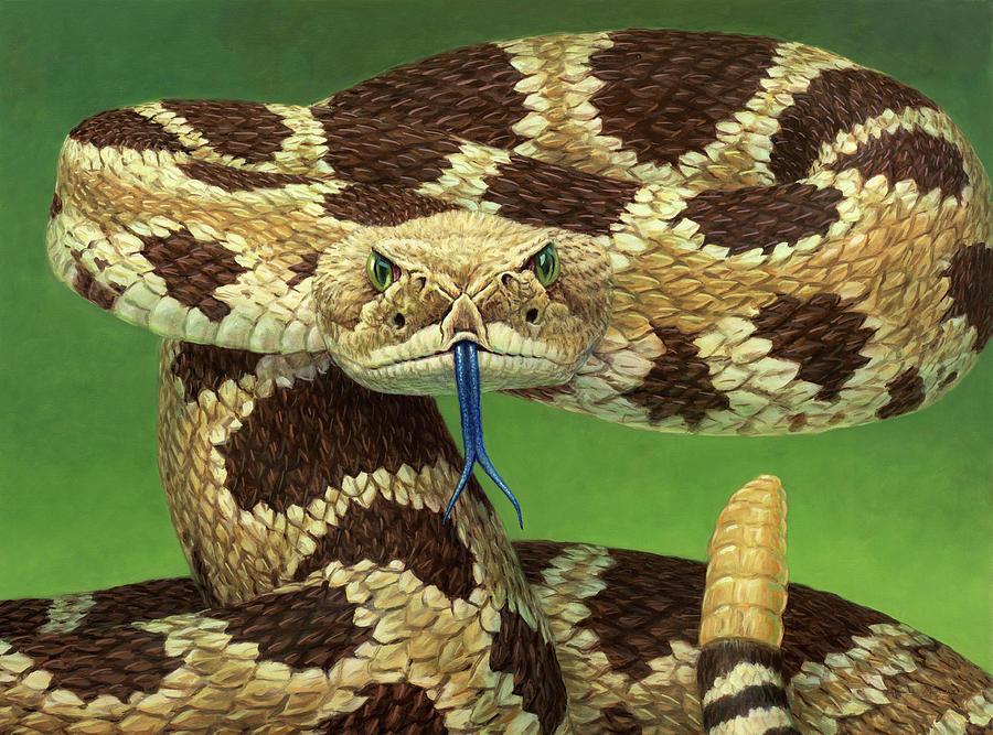 Rattlesnake Painting - Portrait of a Rattlesnake by James W Johnson