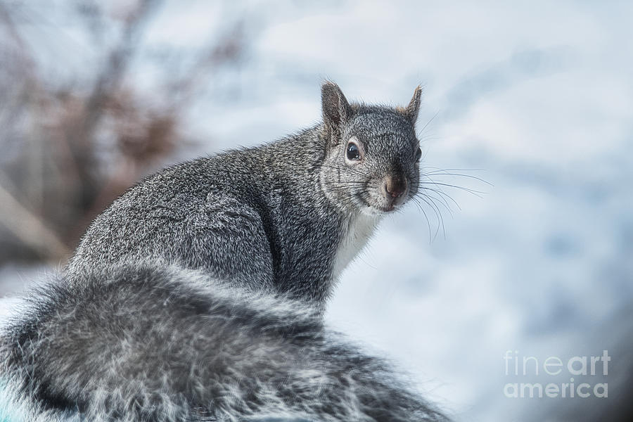 Posing Squirrel by Stan Townsend
