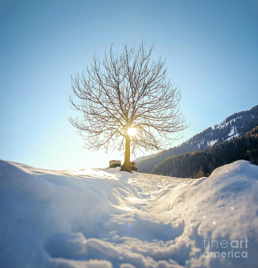 pov snow tree silhouette backlight through branches by Luca Lorenzelli