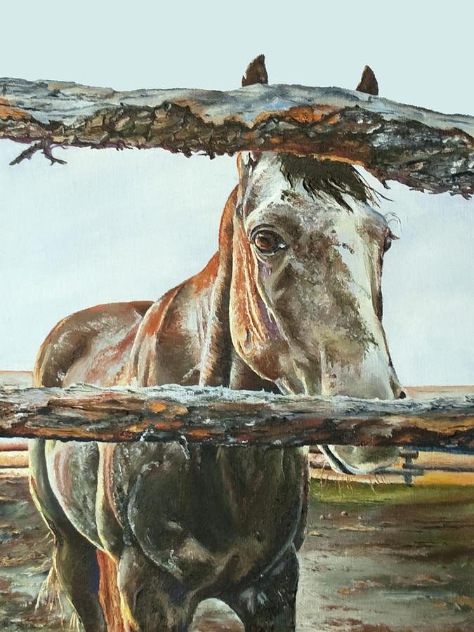 Powder River Elder by Terry R MacDonald