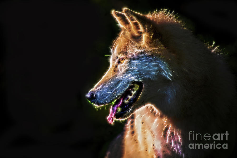 Power Portrait Of Gray Timber Wolf by Sharon McConnell