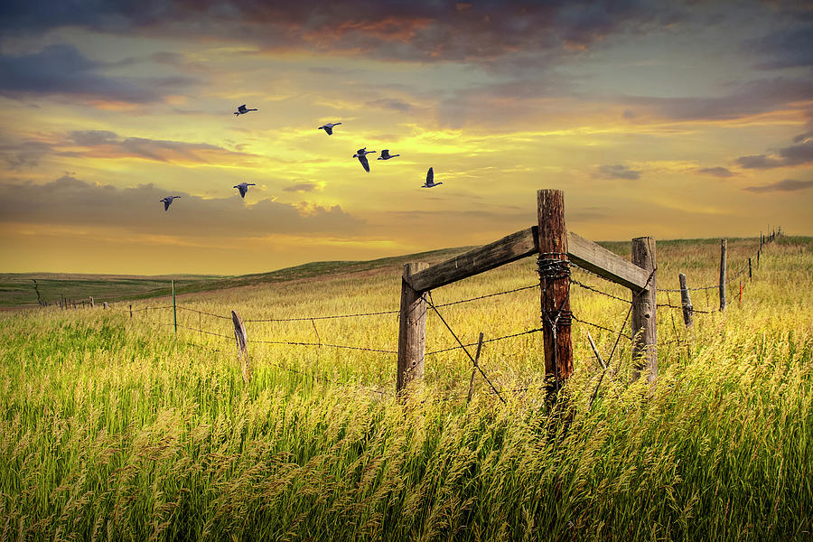 Prairie Field With Fence With Flying Geese At Sunset Photograph