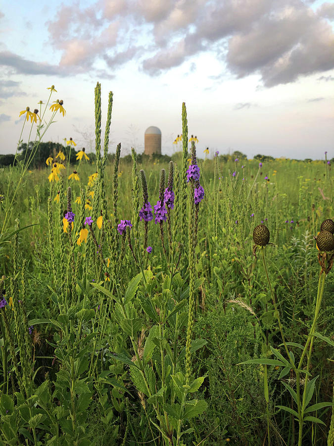 Prairie Wildflowers Silo by Patti Deters