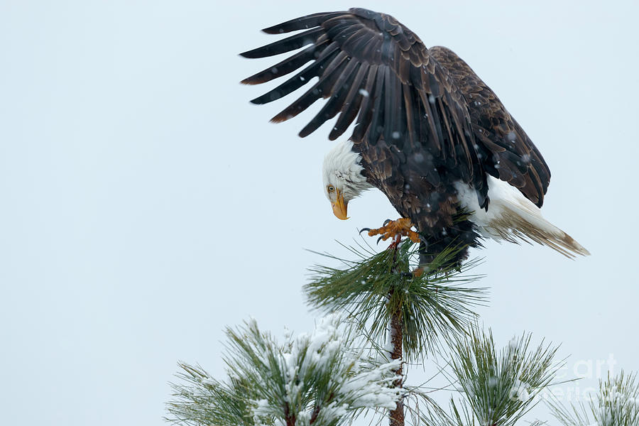 Precise Landing by Beve Brown-Clark Photography