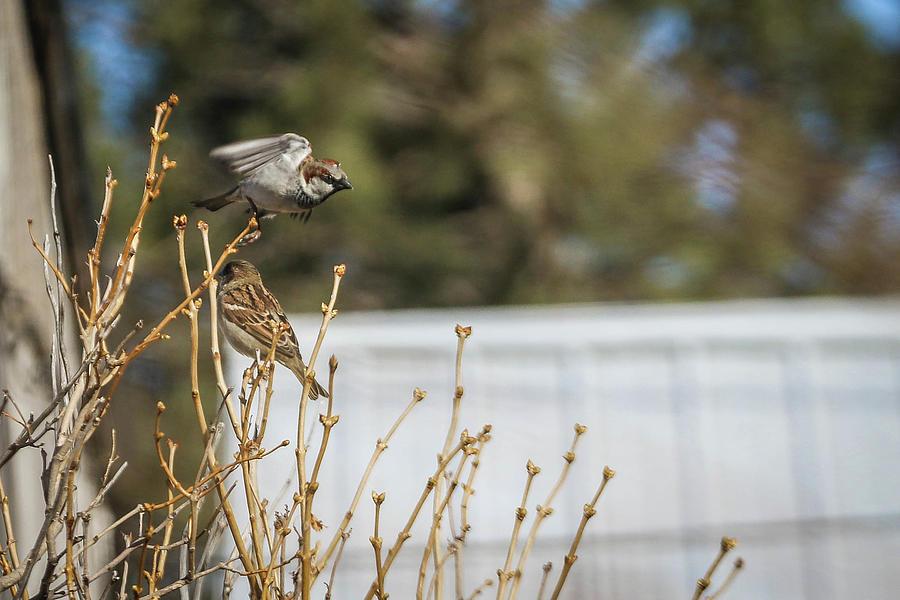Bird Photograph - Preparing for takeoff by Kamie Stephen