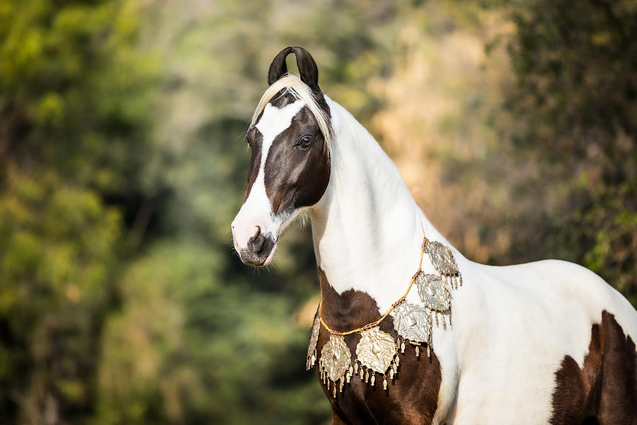 Marwari Photograph - Pride of India II by Picstoriesbymmk Photography