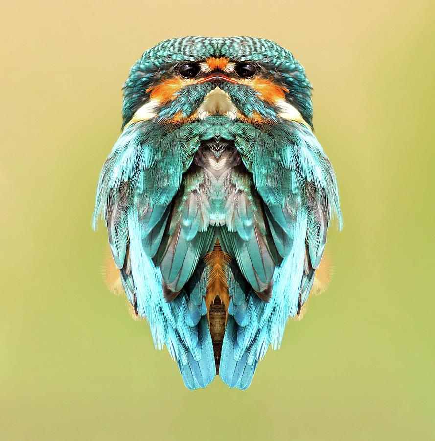 Prideful Featherhead Digital Art