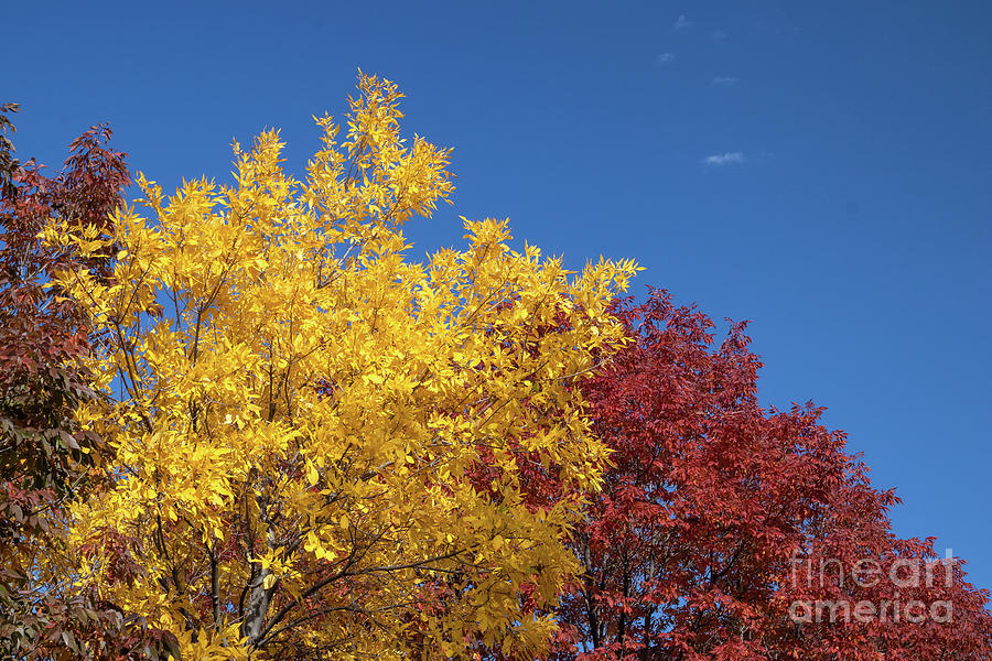 Autumn Photograph - Primary Colors by Nicki Hoffman