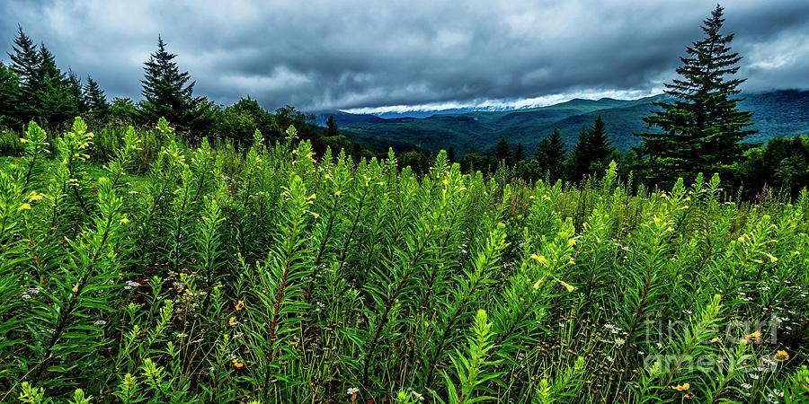 Primrose Panoramic by Thomas R Fletcher