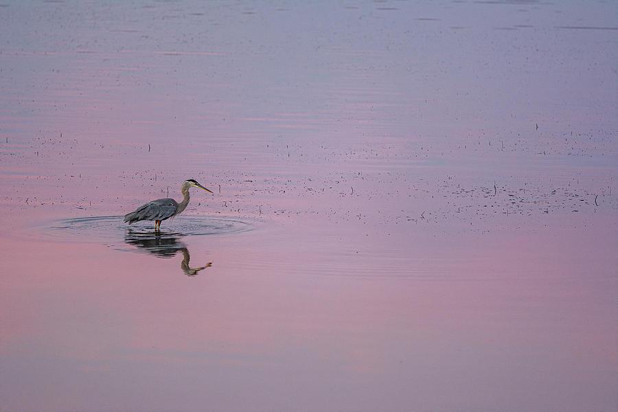 Prince Edward Island Morning  by Douglas Wielfaert