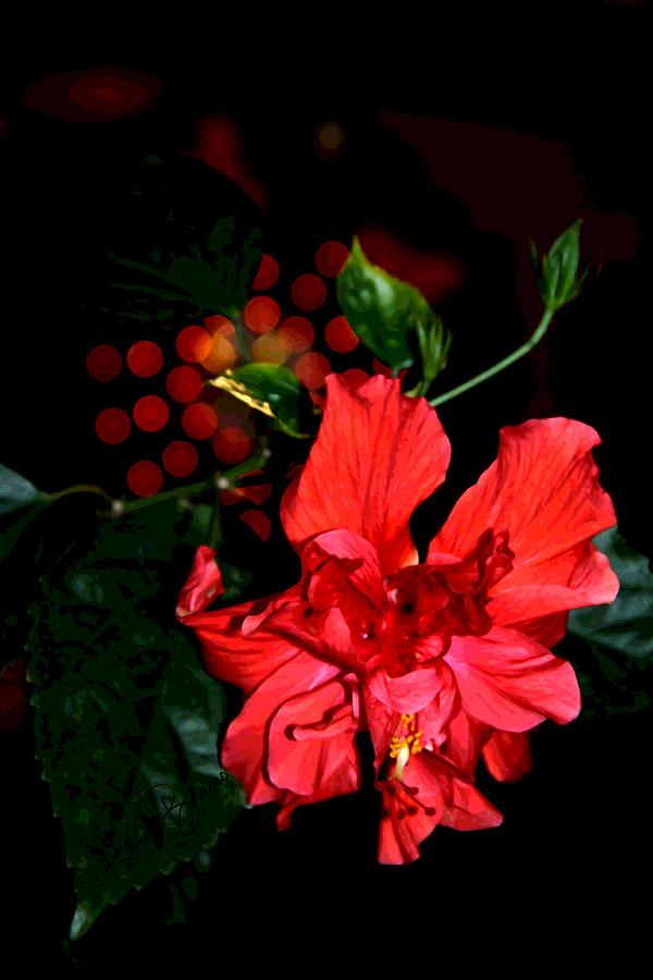 Prize Double Red Hibiscus by Philip and Robbie Bracco