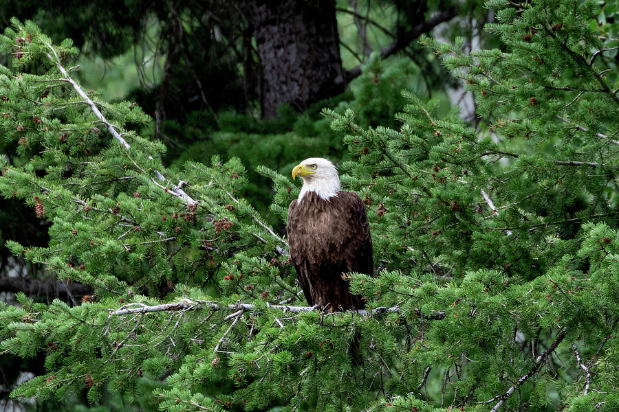 Proud and Free by Ronnie and Frances Howard
