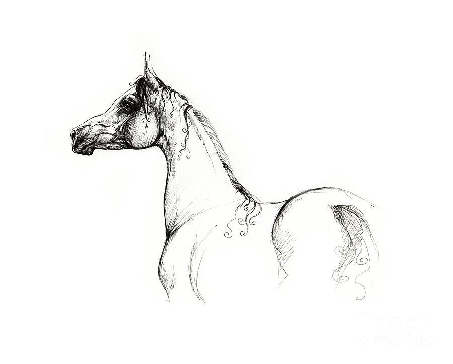 Proud As Arabian Drawing