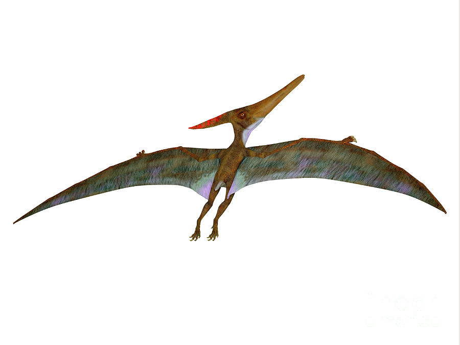 Pteranodon Digital Art - Pteranodon Wings Extended by Corey Ford