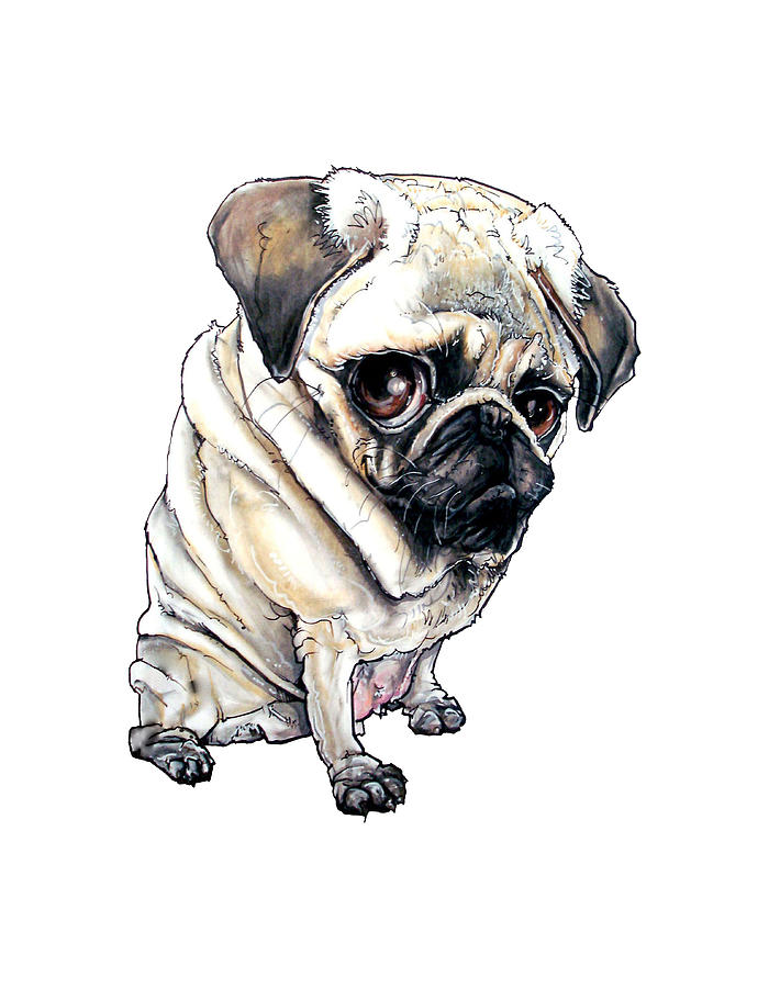 Pug Richard IIi Drawing