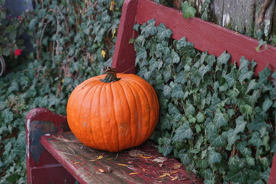 Pumpkin And Ivy Photograph