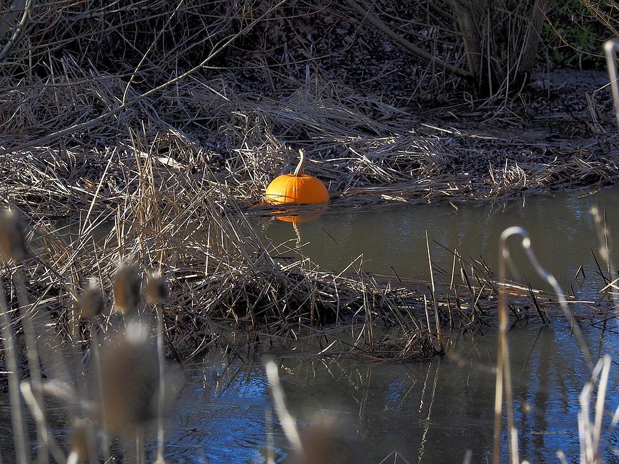 Pumpkin Float by Richard Thomas