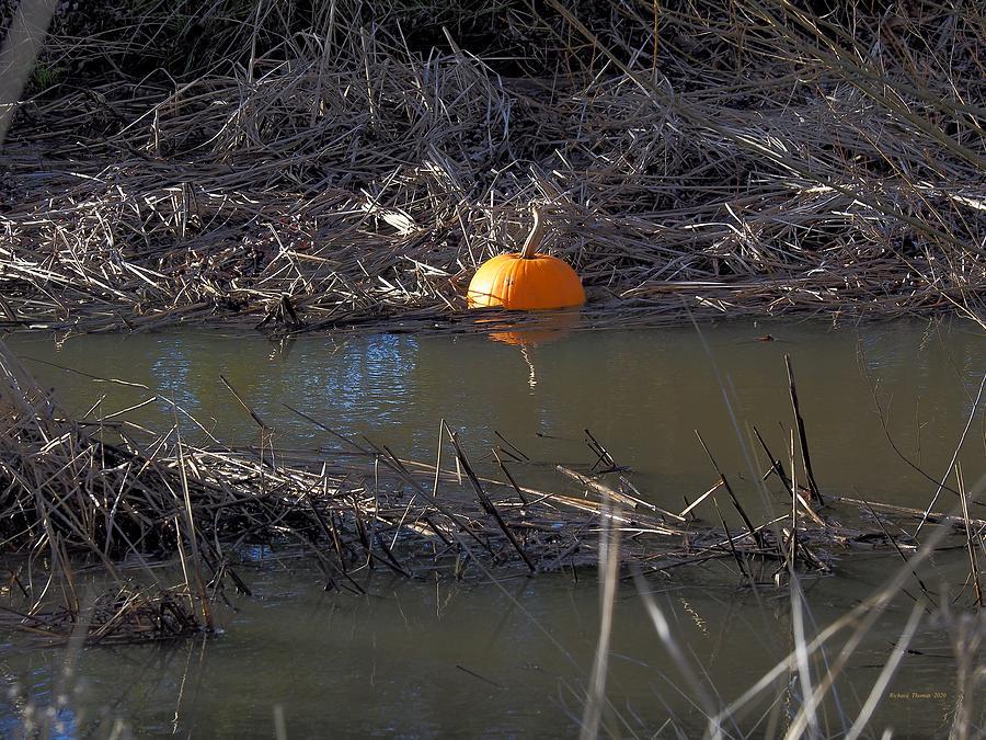 Pumpkin in Creek by Richard Thomas