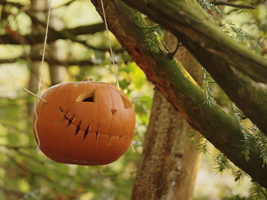 Pumpkin In Forest by Adrian Wale