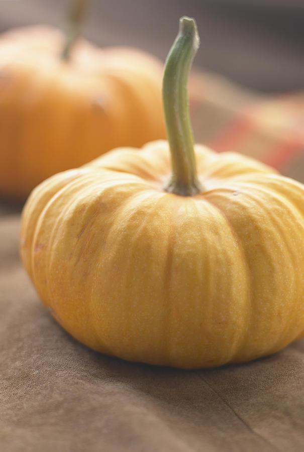 Pumpkins Photograph by Heidi Coppock-Beard