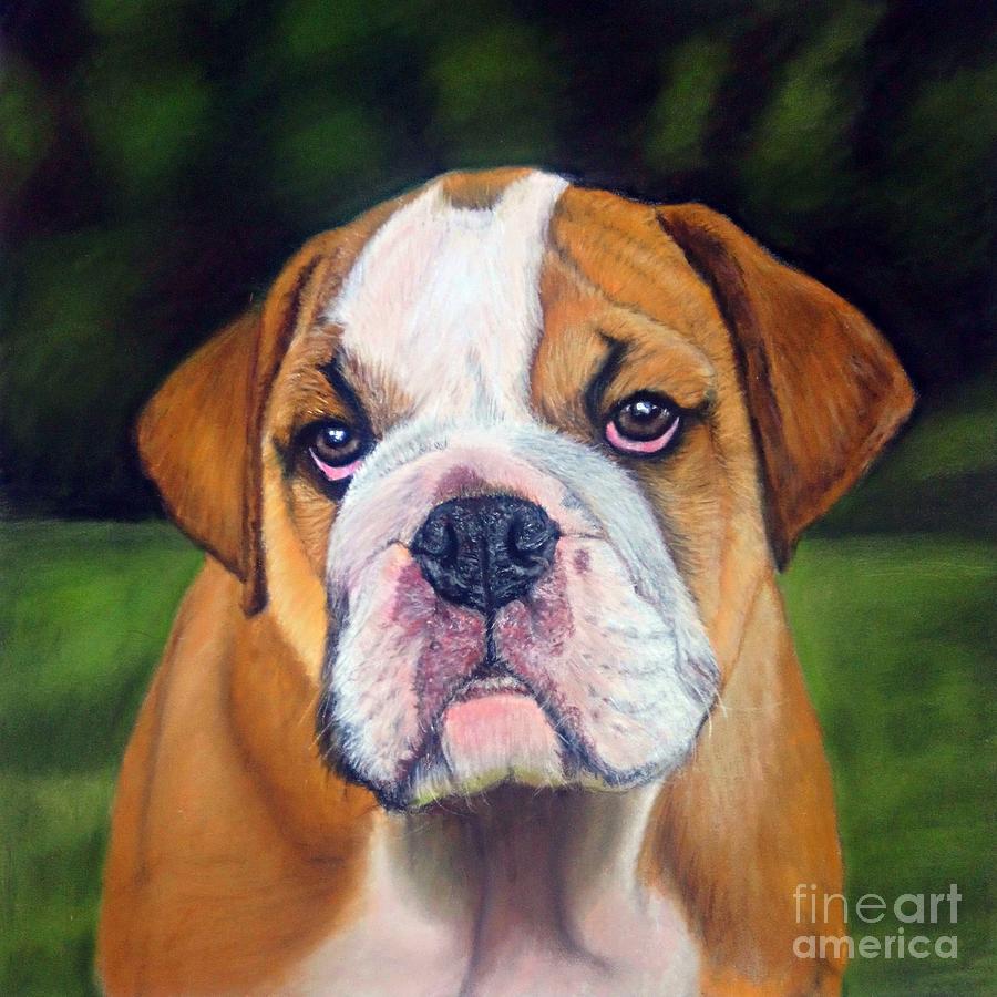 Bulldog Drawing - Puppy Bulldog Pastel Pencil Drawing by Rachel Maytum