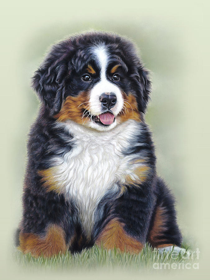 Bernese Mountain Dog Mixed Media - Puppy Love by Donna Mulley