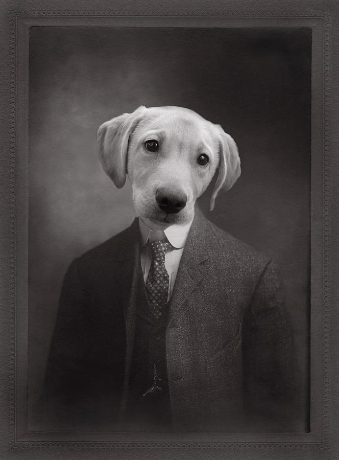 Puppy Portrait Photograph