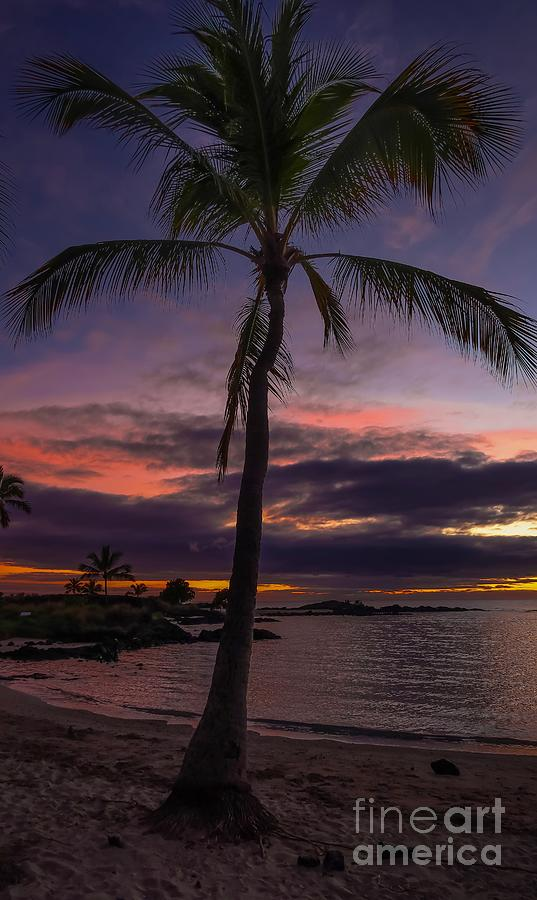 Purple And Pink Sky Photograph