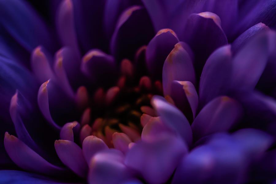 Purple Beauty by Anne Leven