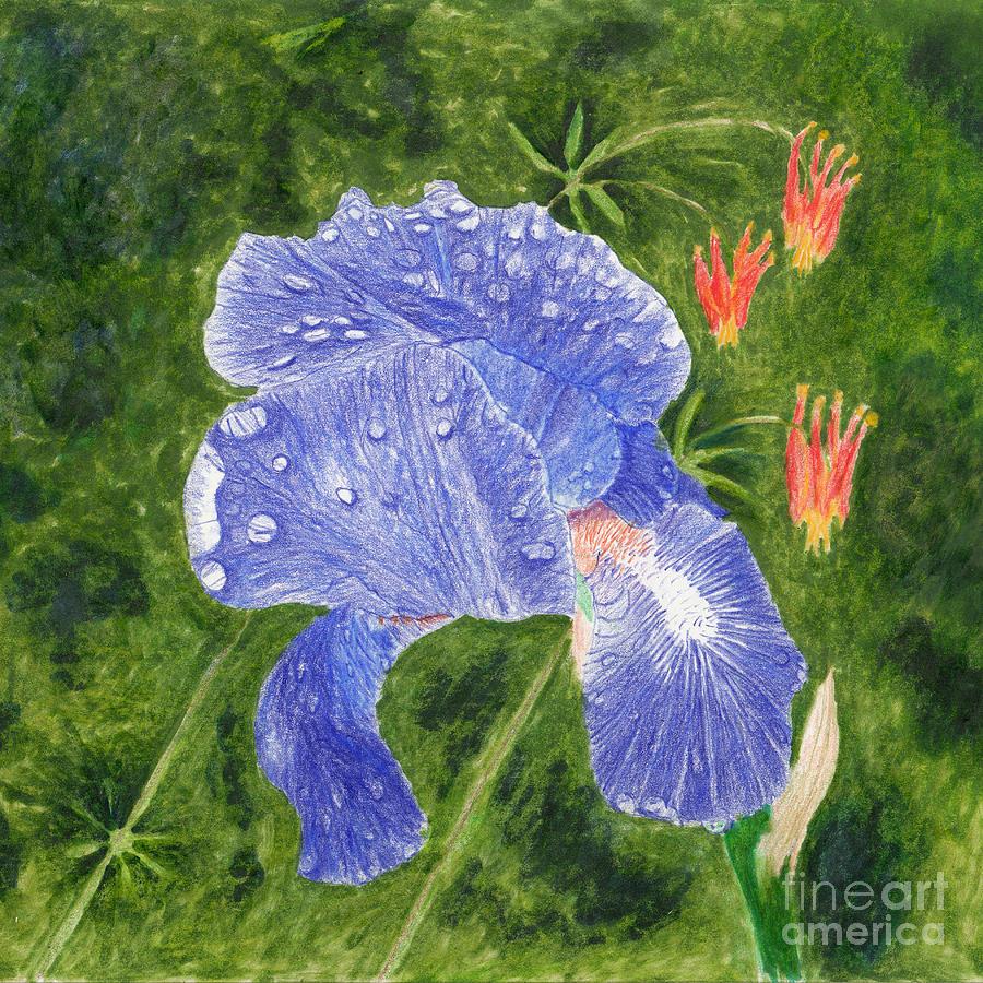Purple Blue Iris With Rain Drops And Wild Columbine Mixed Media