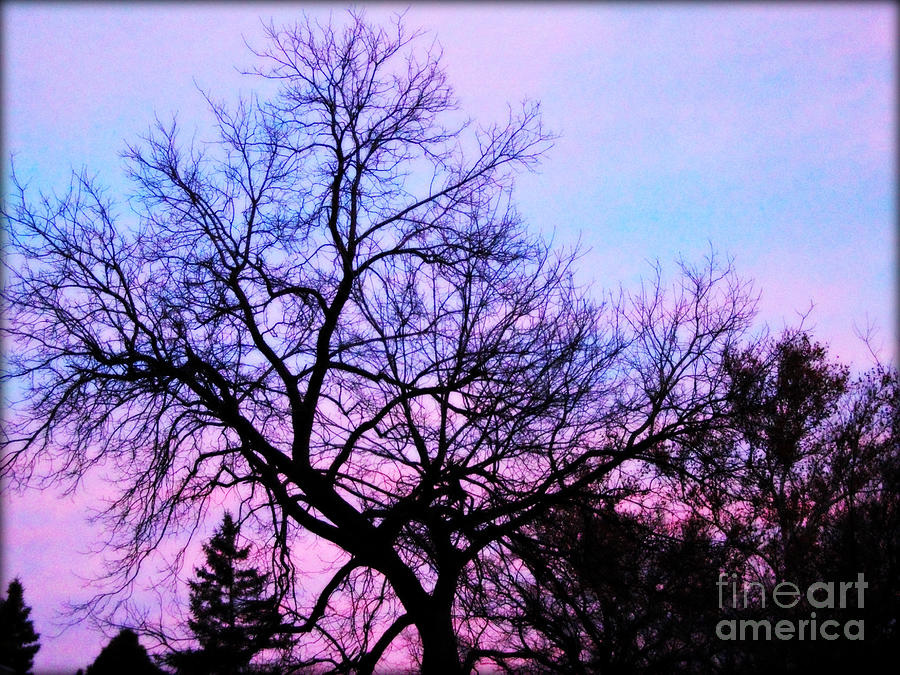 Purple Clouds Tree Branches Silhouette Photograph