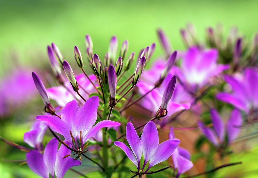 Purple Photograph - Purple Flowers by R Scott Duncan