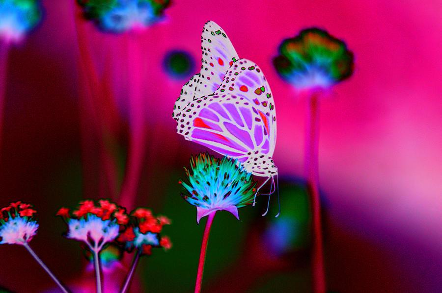 Purple Fly Photograph