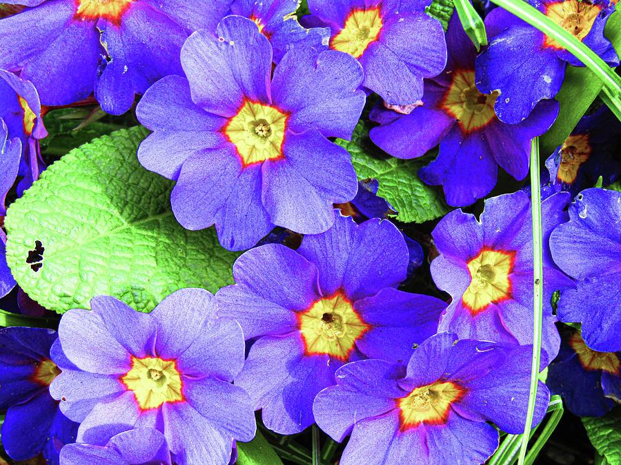 Flowers Photograph - Purple Garden Flowers by Jenna Monroe